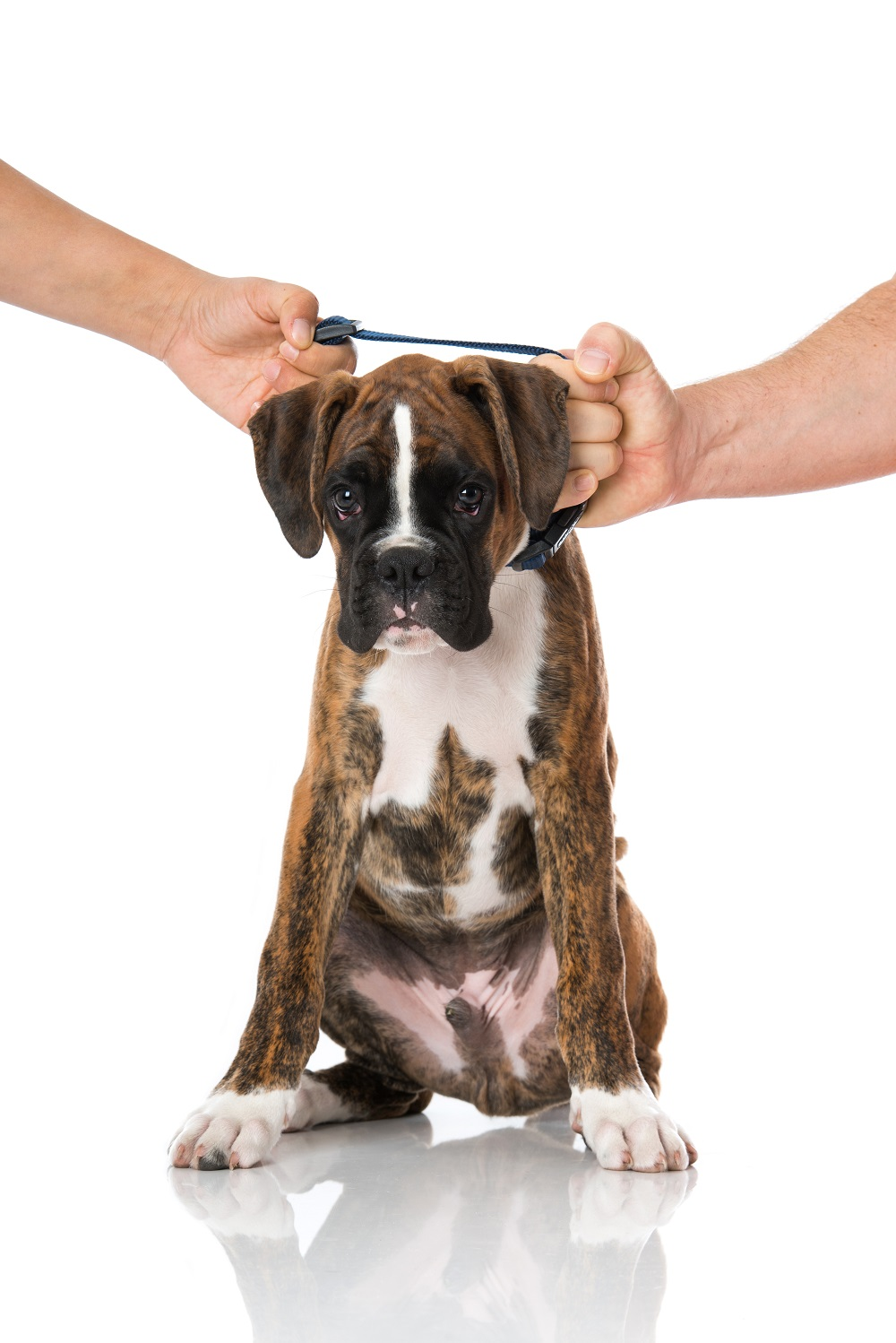 Who Gets the Pets in a Divorce in Arizona?